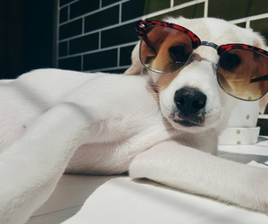 cool, perfect, and dog image