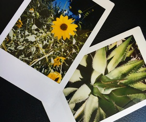 green, photography, and polaroid image