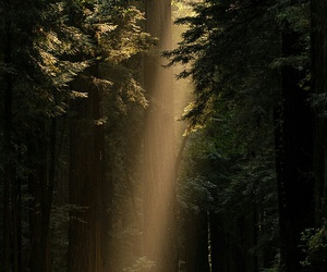 light, trees, and forest image