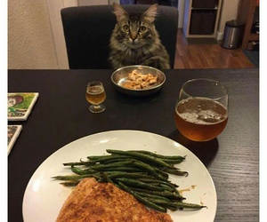 cat, food, and haha image