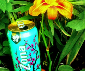 bottle, flower, and nature image