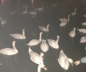 grunge, Swan, and night image
