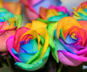 colours, flowers, and photography image