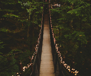 light, bridge, and forest image