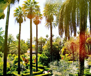 nature, palmtrees, and spain image