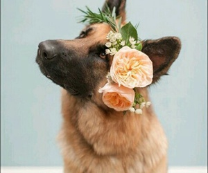 dog, flowers, and sweet image