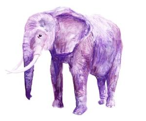 elephant and purple image
