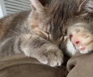 cats, sleepy kitty, and cat naps image