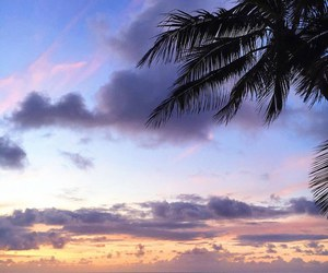palms, ocean, and sky image