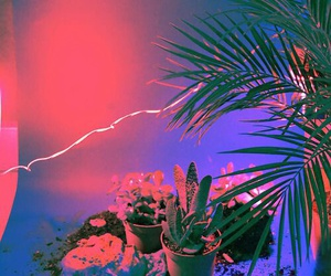 neon, light, and pink image