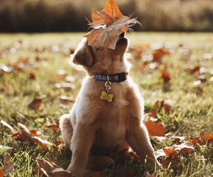 dog, autumn, and puppy image