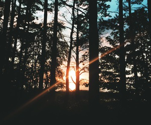 nature, forest, and sunset image