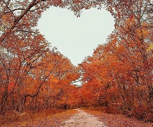 heart and autumn image