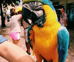 animal, parrot, and tropical image