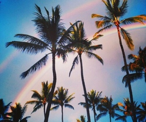 Hot, palm tree, and summer image