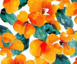 flores naranja wallpapers image