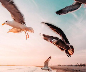 indie, theme, and birds image