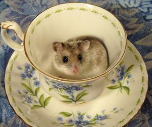 mouse, tea, and teacup image