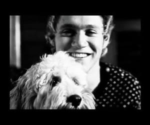23, niall, and niall horan image
