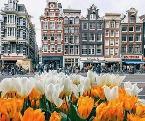 flowers, city, and tulips image
