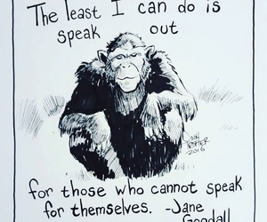 animal rights, monkey, and quote image