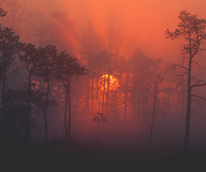 forest, red, and mist image