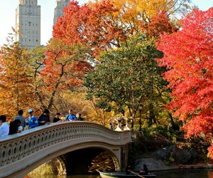 amazing, Central Park, and u.s.a image