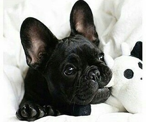 black, cute, and dog image