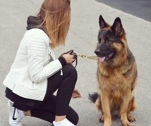 dog, german, and girl image