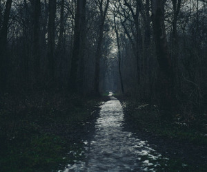 dark, forest, and beautiful image