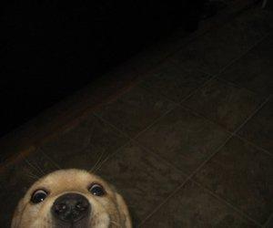dog, funny, and animal image