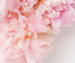 flowers, pink flowers, and lockscreen image