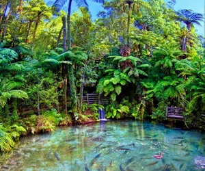 new zealand, summer, and nature image