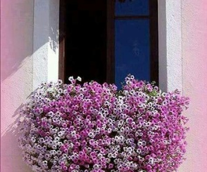 awesome, flowers, and house image