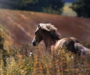 amazing, animal, and animals image