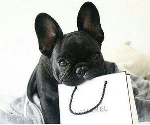 dog, chanel, and cute image
