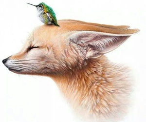 art and fox image