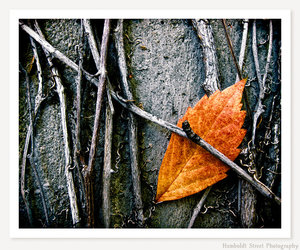 autumn, dark, and etsy image