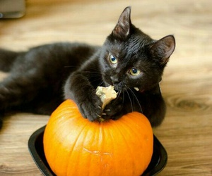 pumpkin, cat, and autumn image