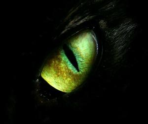 eye, cat, and dragon image