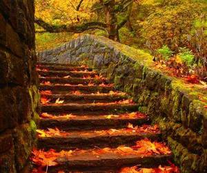 autumn, stairs, and nature image
