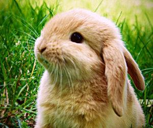 bunny, bunnies, and rabbit image