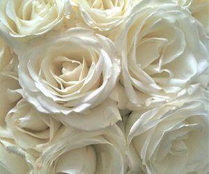feminine, lovely, and rose image