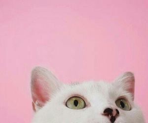 pink, tumblr, and cat image