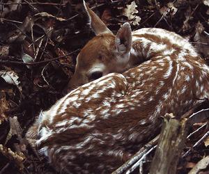 animals, dark brown, and fall image