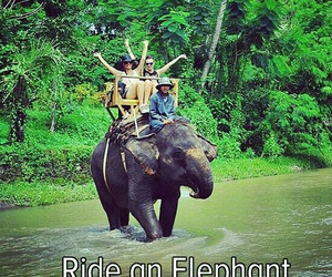 adventure, elephants, and travel image