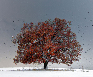 autumn, snow, and tree image