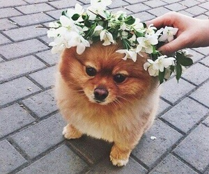 animals, fluffy, and pretty image