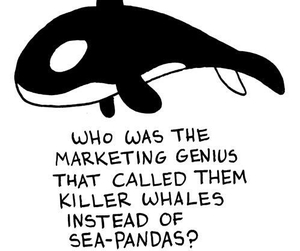 panda, whale, and funny image