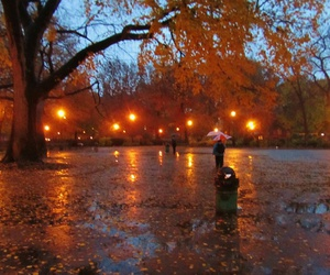 leaves, lights, and rain image